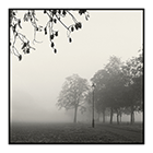 autumn morning fog clapham common
