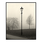 lamp trees mist clapham common