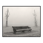 seat and saplings fog clapham common