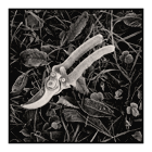 frosty secateurs still life